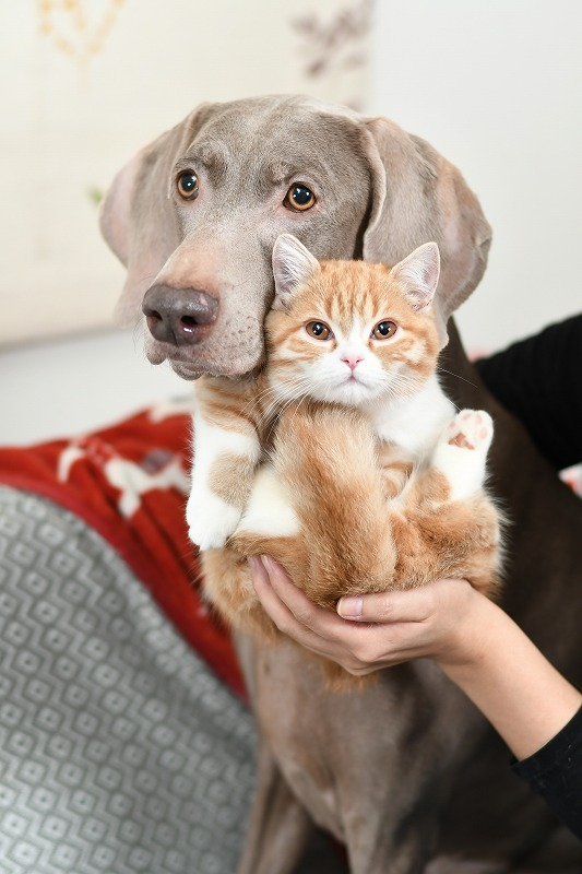 猫と楽しく暮らそう