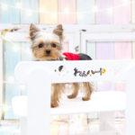 【ノーリードはやめてください】ノーリードの犬に襲われ、愛犬が命を落とした記録