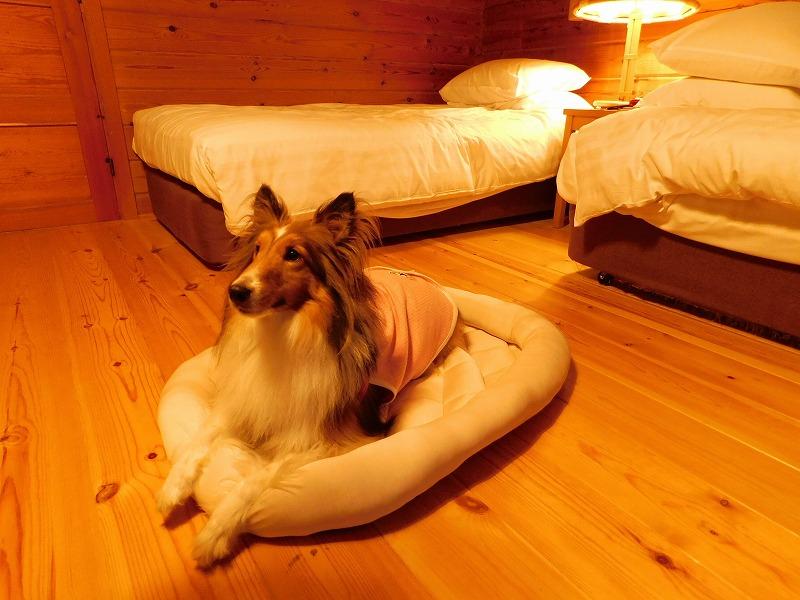 愛犬と泊まれるオススメの温泉・ホテル