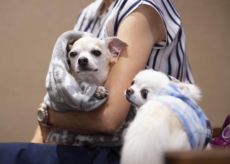 保護犬を迎える