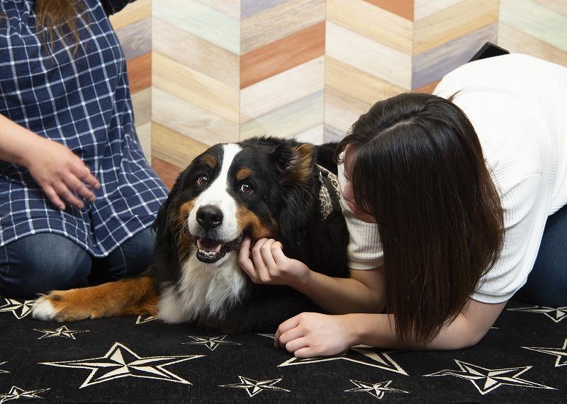 保護犬と幸せになる