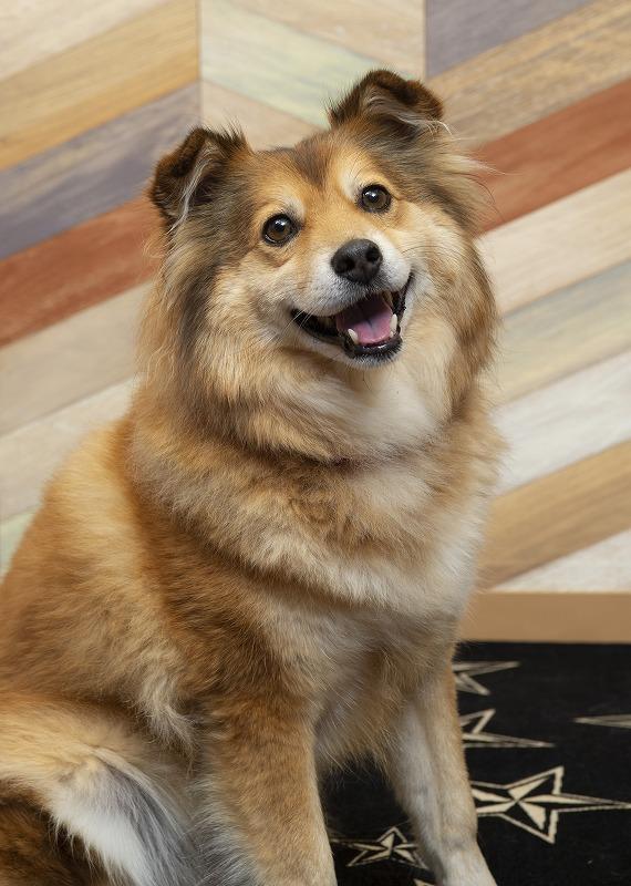 保護犬と幸せになるという選択肢
