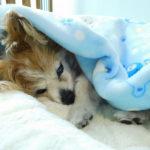 病気や認知症になっても、最期まで大切に…「老犬ホーム」という選択肢
